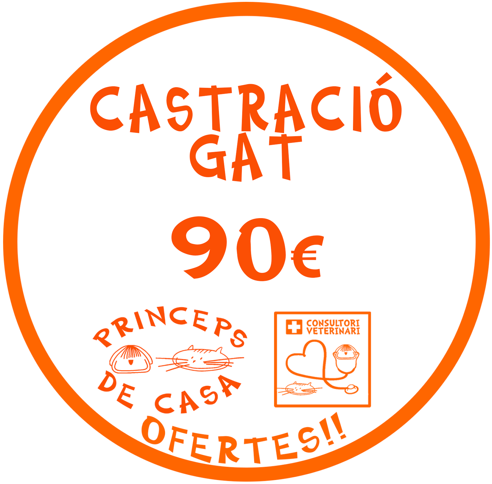 neuter cat gat castracio barcelona english speaking vet