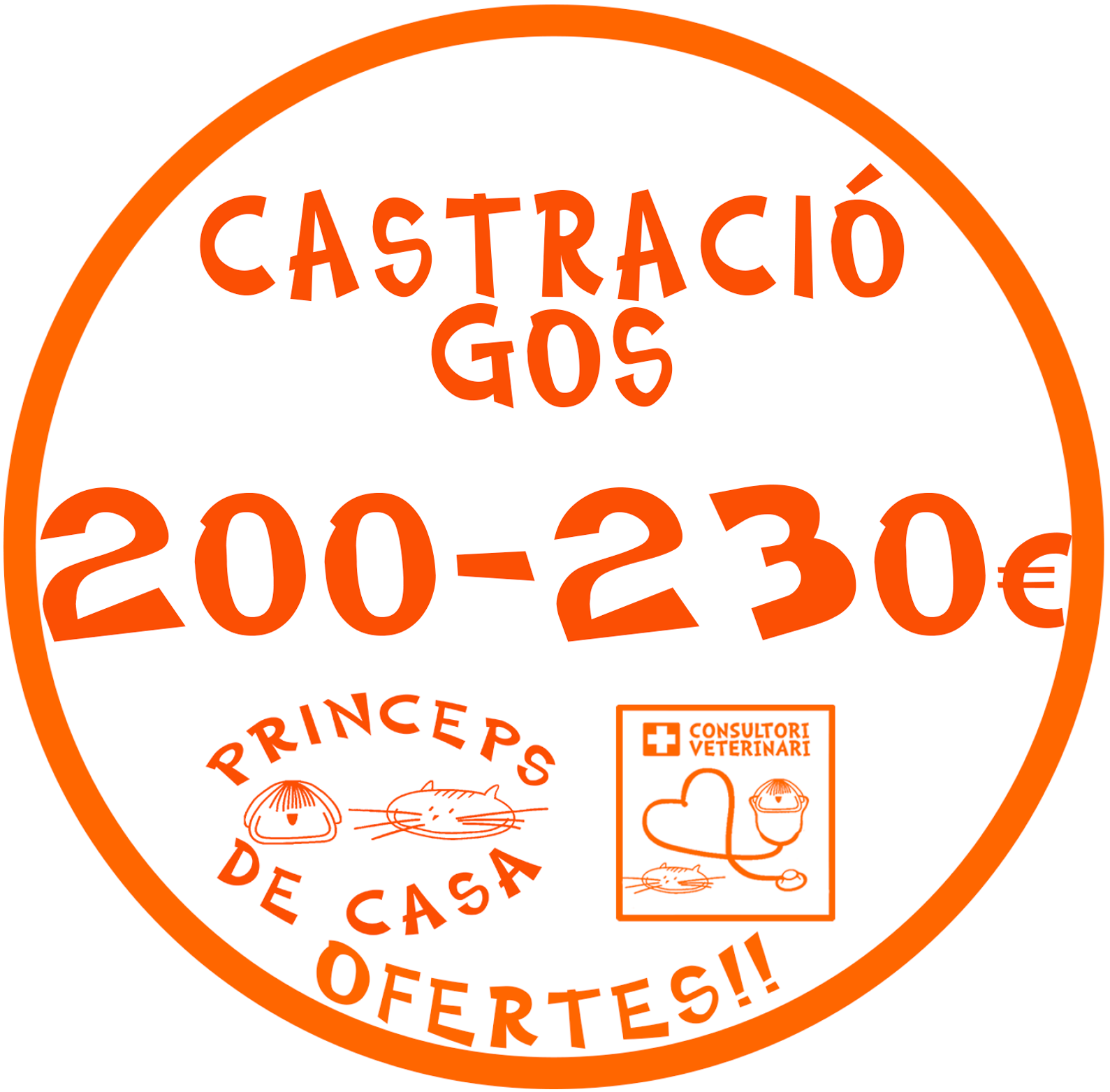 castracio gos dog castration english speaking vet maragall horta vilapicina barcelona