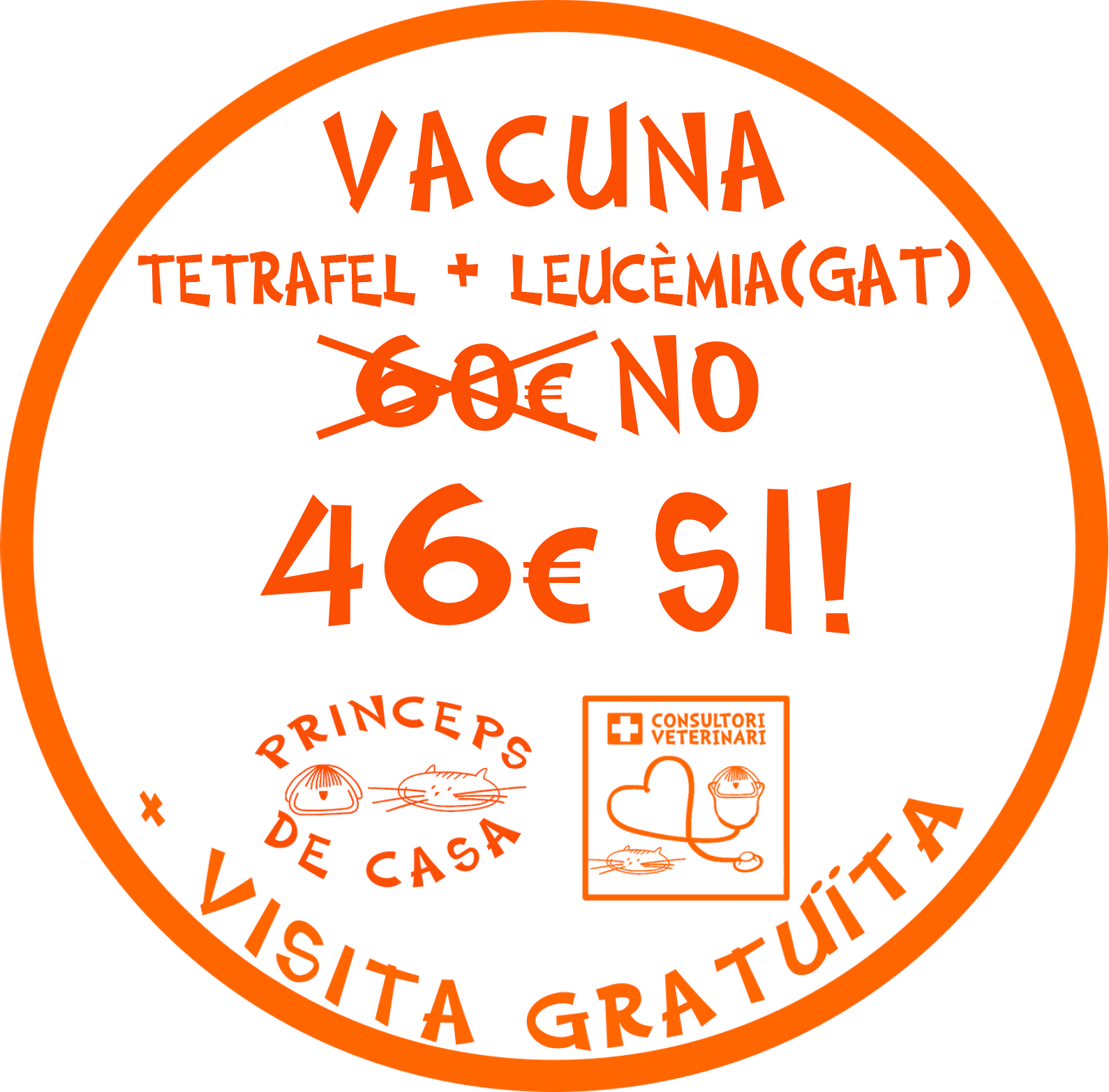 vacuna tetrafel + leucemania gat barcelona bon preu english speaking vet